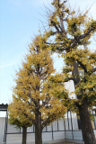 多摩高の風景(建替えの記録)vol.15 H27.12.07